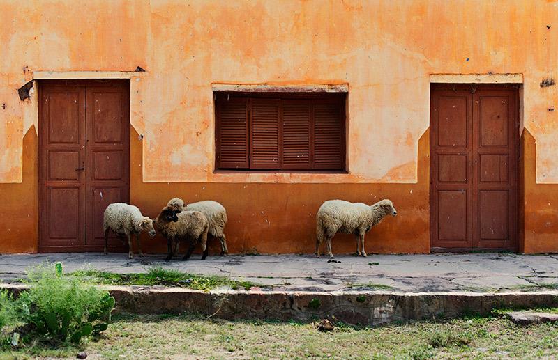 rowan_thornhill_argentina_002