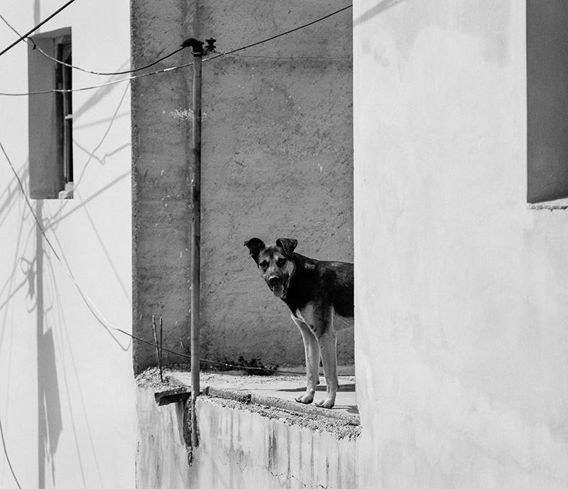 rowan_thornhill_argentina_006